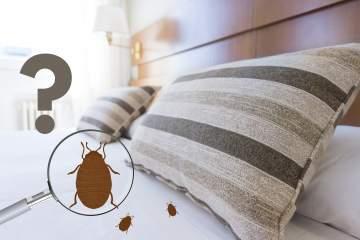 Comment savoir si j'ai des punaises de lit ?