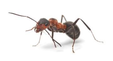 Société anti fourmis à Toulouse